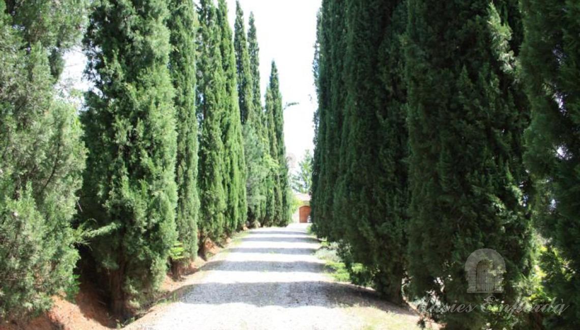 Camino de acceso a la propiedad flanqueada a ambos lados por una legión de cipreses