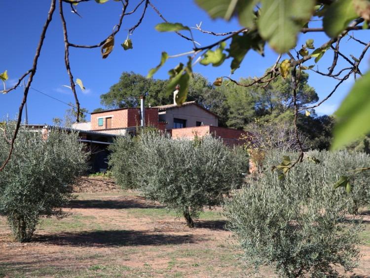 Vista de los campos de olivos y la masía al fondo de la imagen
