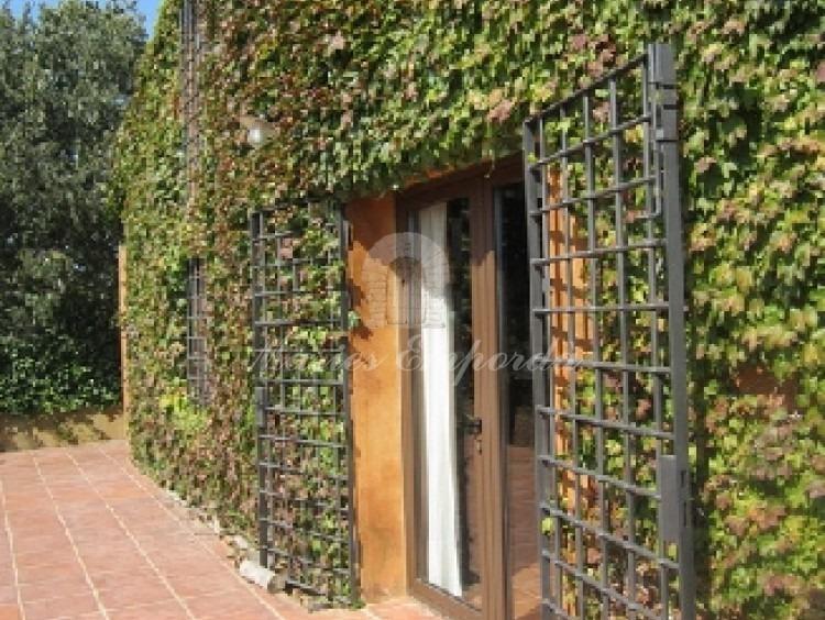Fachada sur de la casa con la hiedra trepadora verde que la cubre