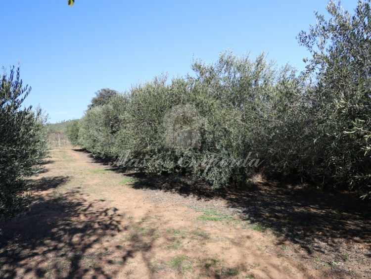 Vista de los campos de olivos
