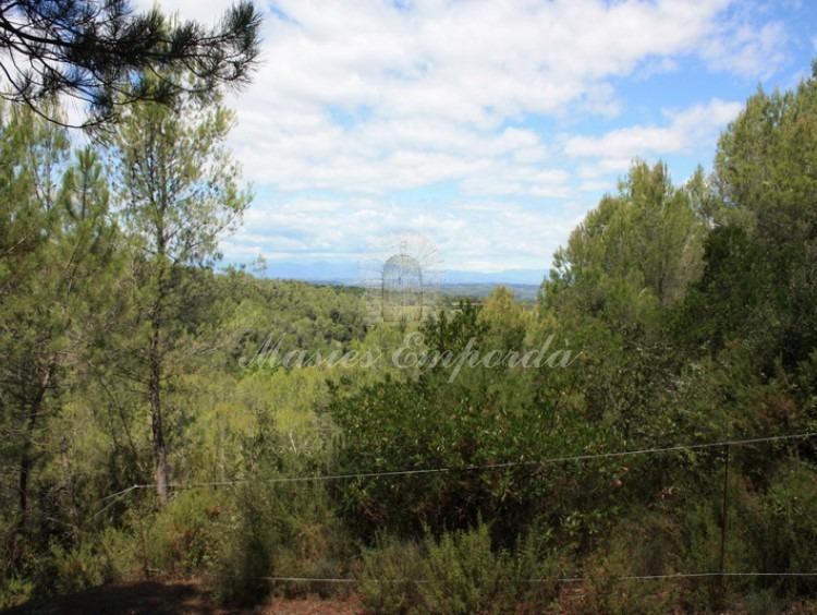 Visites els camps i bosc de la propietat